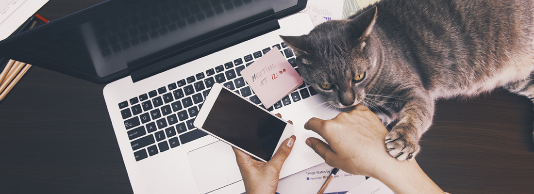A laptop with hands holding a phone, with a cat lying by the side